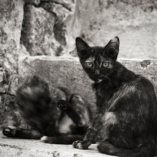 Cats in Matere, italy, 2013